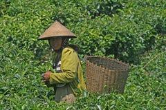 Agricoltore Portrait Fotografia Stock