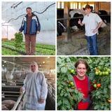 Agricoltore Portraits Collage fotografia stock libera da diritti