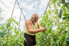 Agricoltore reale nel suo proprio giardino domestico Fotografie Stock Libere da Diritti