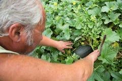 Agricoltore reale nel suo proprio giardino domestico Fotografia Stock Libera da Diritti