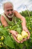 Agricoltore reale nel suo proprio giardino domestico Fotografie Stock