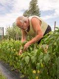 Agricoltore reale nel suo proprio giardino domestico Fotografia Stock