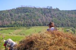 Agricoltore rumeno su Charriot fotografia stock