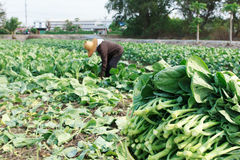 Agricoltore rurale Fotografie Stock