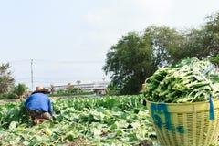 Agricoltore rurale Fotografie Stock Libere da Diritti