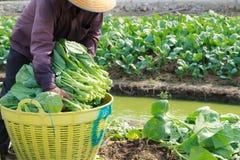 Agricoltore rurale Immagini Stock Libere da Diritti