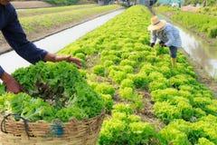 Agricoltore rurale Fotografia Stock Libera da Diritti