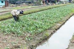 Agricoltore rurale Fotografia Stock