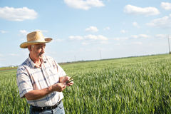 Agricoltore senior Immagini Stock