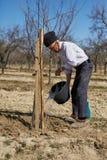 Agricoltore senior che pianta un susino Fotografie Stock Libere da Diritti