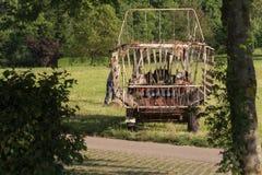 agricoltore senior che rivolta il fieno con un vecchio traktor Immagine Stock Libera da Diritti