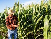 Agricoltore senior che sta in un campo Immagine Stock