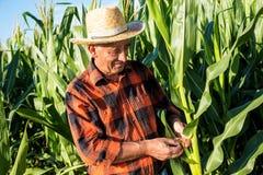 Agricoltore senior che sta in un campo Fotografia Stock Libera da Diritti