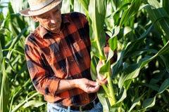 Agricoltore senior che sta in un campo Immagini Stock Libere da Diritti