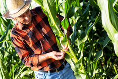 Agricoltore senior che sta in un campo Fotografia Stock
