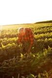 Agricoltore senior che sta in un campo Fotografie Stock