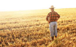 Agricoltore senior che sta in un giacimento di grano Fotografia Stock Libera da Diritti