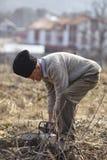 Agricoltore senior che taglia un albero a pezzi Immagine Stock Libera da Diritti