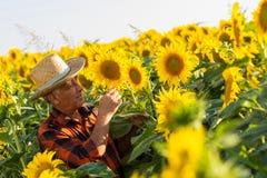 Agricoltore senior nel raccolto d'esame del campo Immagini Stock