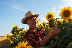 Agricoltore senior nel raccolto d'esame del campo Immagine Stock