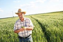 Agricoltore senior in un campo Immagini Stock