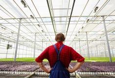 Agricoltore in serra Immagini Stock Libere da Diritti
