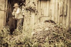 Agricoltore Shoveling il concime del cavallo Fotografia Stock
