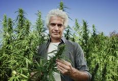 Agricoltore sorridente che controlla le piante della canapa Immagini Stock