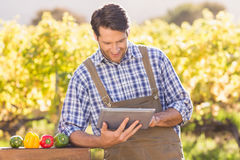 Agricoltore sorridente che per mezzo di una compressa digitale Fotografie Stock