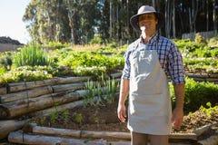 Agricoltore sorridente che sta nella vigna Fotografia Stock Libera da Diritti