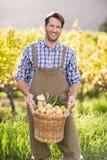 Agricoltore sorridente che tiene un canestro delle patate Immagine Stock