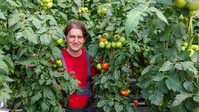 Agricoltore sorridente in serra commerciale Immagine Stock