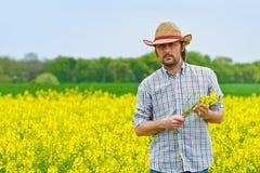 Agricoltore Standing nel giacimento agricolo coltivato Rapseed del seme oleifero Immagini Stock Libere da Diritti