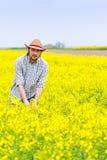 Agricoltore Standing nel giacimento agricolo coltivato seme di ravizzone del seme oleifero Immagine Stock Libera da Diritti
