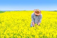 Agricoltore Standing nel giacimento agricolo coltivato seme di ravizzone del seme oleifero Immagini Stock
