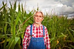 Agricoltore Standing Next To un campo di grano Fotografia Stock Libera da Diritti