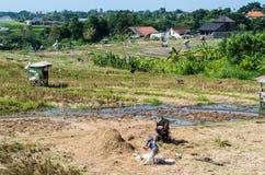 Agricoltore su un giacimento del riso Fotografia Stock