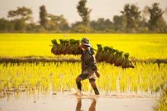 Agricoltore sui campi verdi Immagine Stock Libera da Diritti