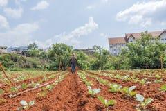 Agricoltore sul campo Immagini Stock Libere da Diritti