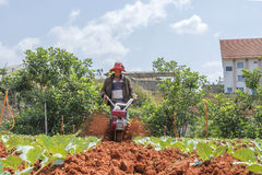 Agricoltore sul campo Immagine Stock