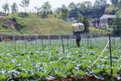 Agricoltore sul campo Fotografie Stock Libere da Diritti