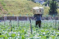 Agricoltore sul campo, città del Lat del Da, provincia di Lam Dong, Vietnam Fotografie Stock Libere da Diritti