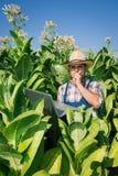 Agricoltore sul campo di tabacco Immagine Stock Libera da Diritti