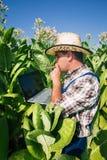 Agricoltore sul campo di tabacco Fotografia Stock