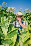 Agricoltore sul campo di tabacco Immagine Stock