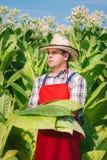 Agricoltore sul campo di tabacco Fotografia Stock Libera da Diritti