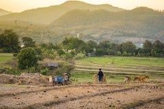 2018-01-17: agricoltore sul lavoro nella valle del pai Fotografie Stock Libere da Diritti