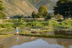 Agricoltore sul lavoro in una risaia Immagine Stock