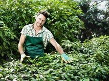 Agricoltore sul lavoro in una serra Fotografia Stock Libera da Diritti