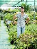 Agricoltore sul lavoro in una serra Immagini Stock
